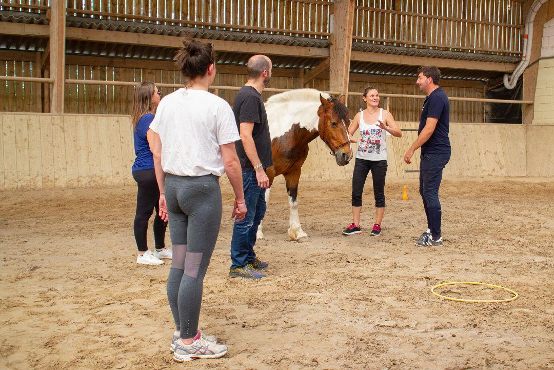 Equité équi-coaching groupe avec cheval pour Anemos