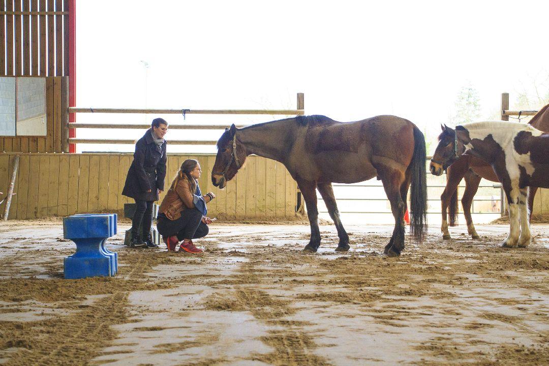 Equité équi-coaching groupe avec cheval pour Biocoop