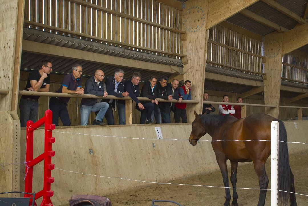 Equité équi-coaching groupe avec cheval pour Hutchinson