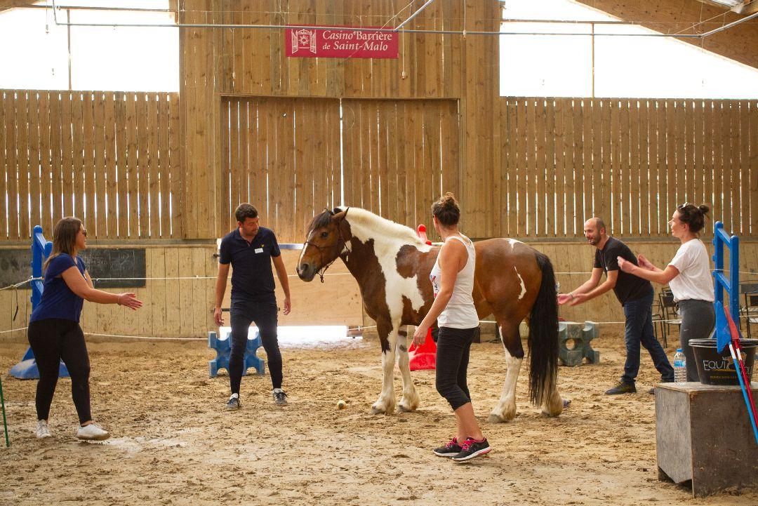 Equité équi-coaching team et cheval pour Anemos